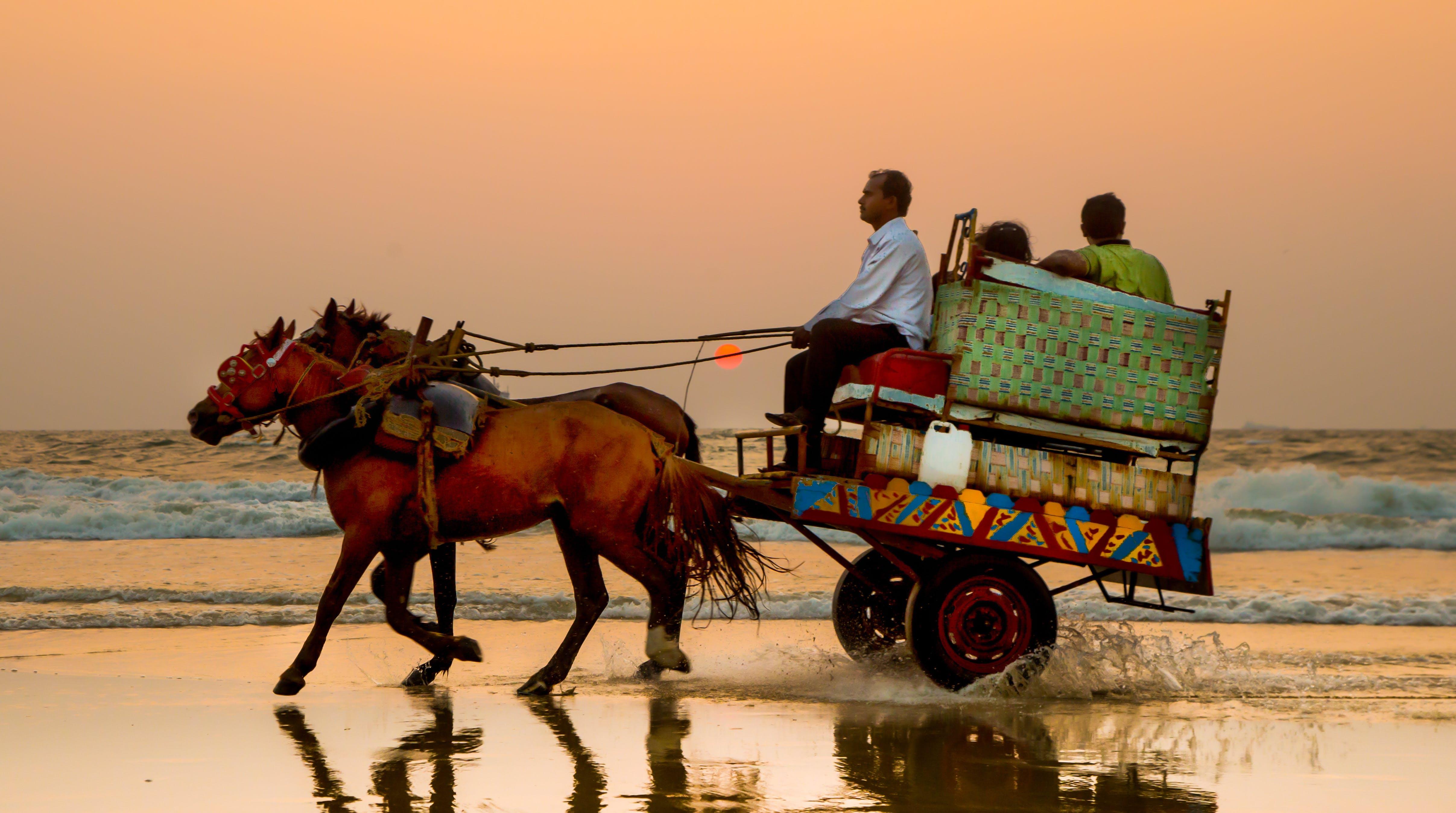 Free stock photo of beach, evening, evening sky, horse