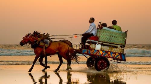 Fotos de stock gratuitas de caballo, cielo al atardecer, India, indio