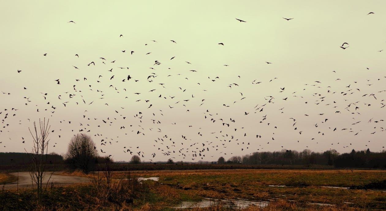 dagsljus, fåglar, flock