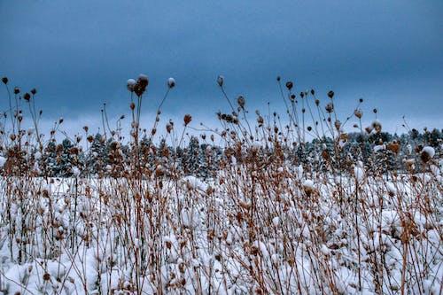 Brown Grass Under Blue Sky