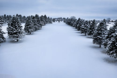 Free stock photo of christmas, cold, conifer