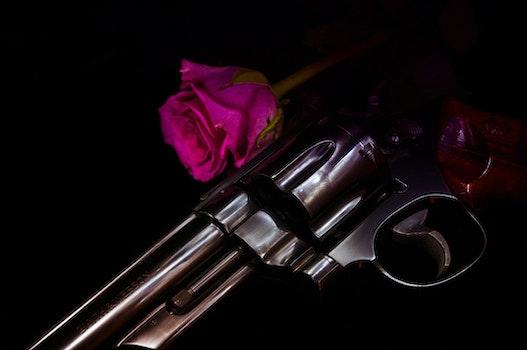 Free stock photo of flower, rose, gun, handgun