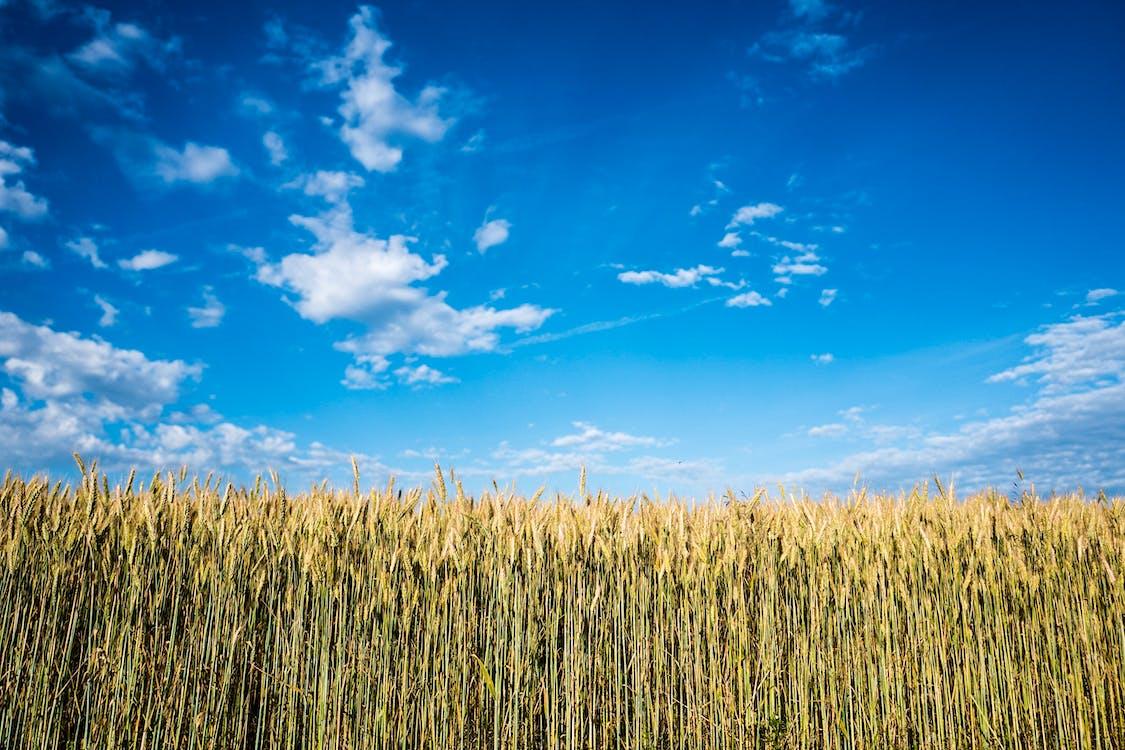 agricultura, área, aumento