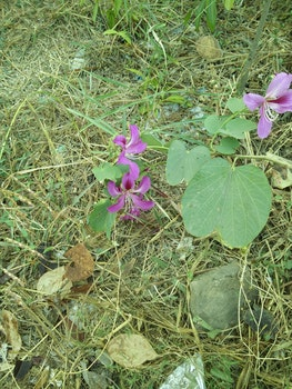 Free stock photo of flowers, wild flowers, nature photography, indian flower