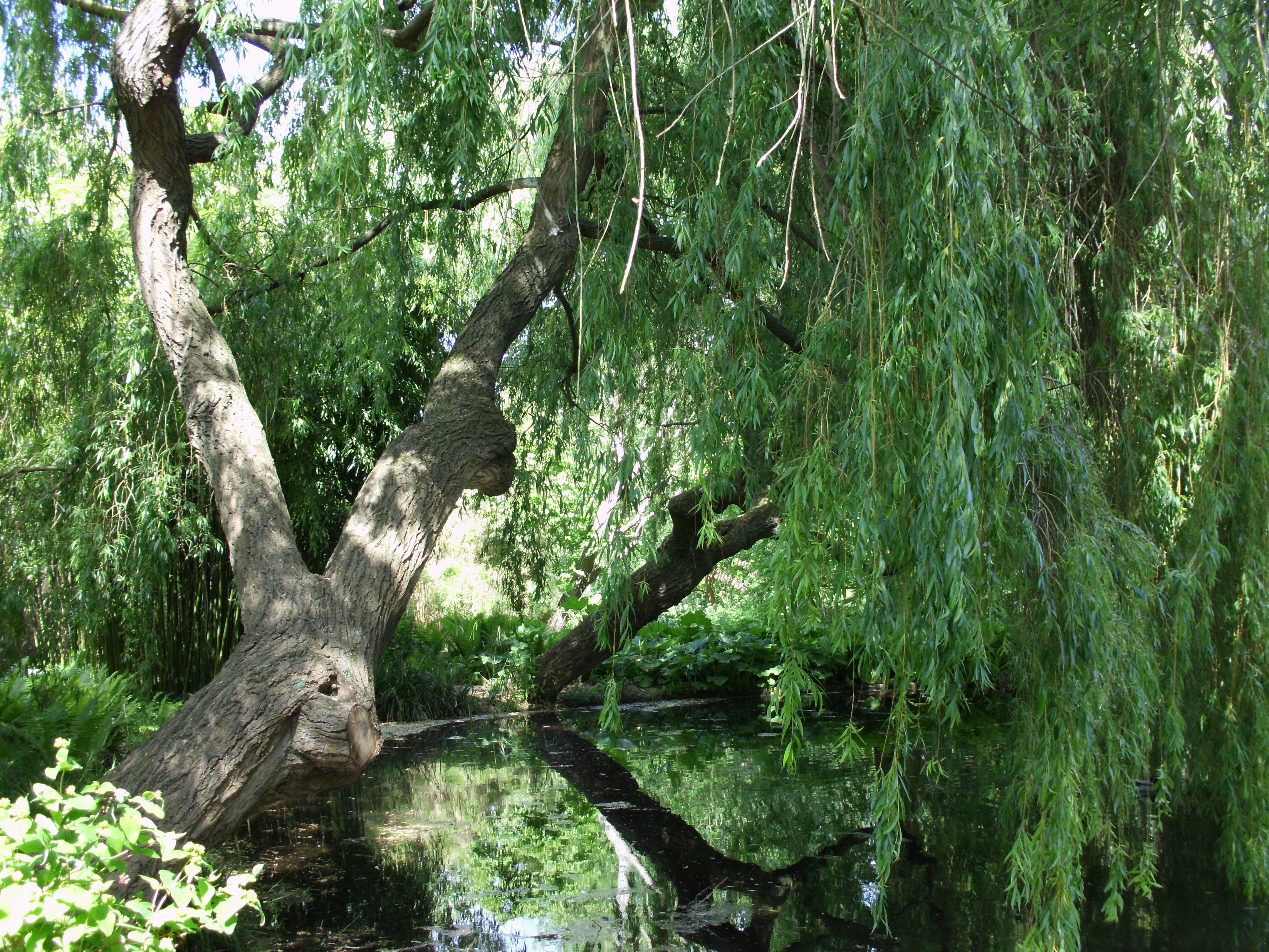 Free stock photo of Tree at Cambridge University Botanic Garden UK