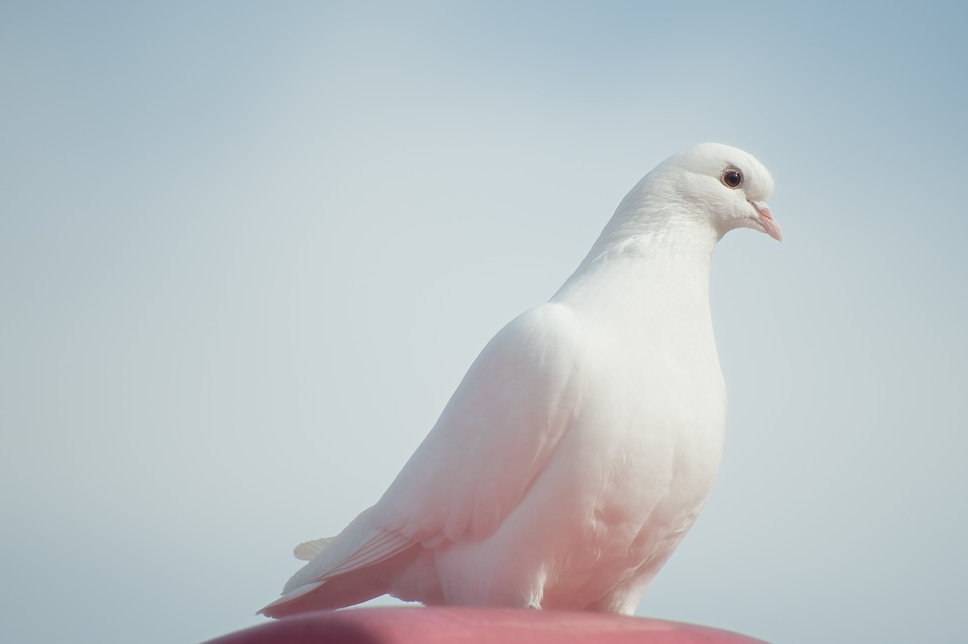 White Dove on Brown Surface Under Blue Sky