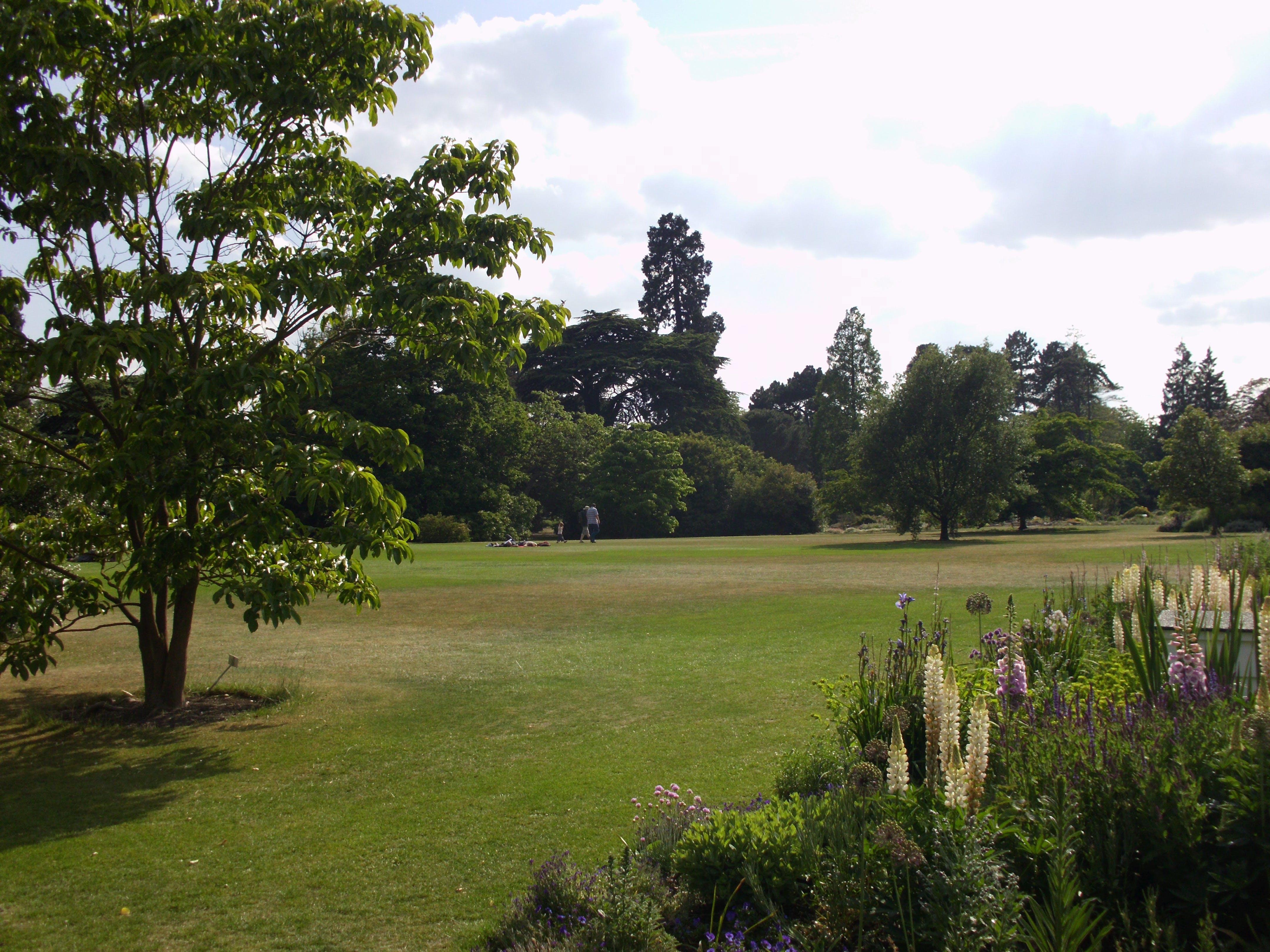 Free stock photo of Cambridge University Botanic Garden
