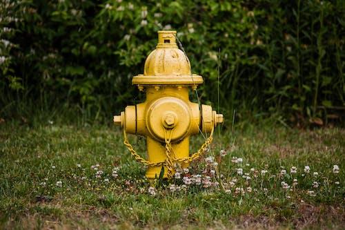 Ilmainen kuvapankkikuva tunnisteilla kasvikunta, kenttä, kesä