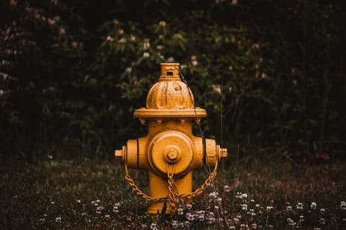 Yellow Fire Hydrant on Green Grass Field