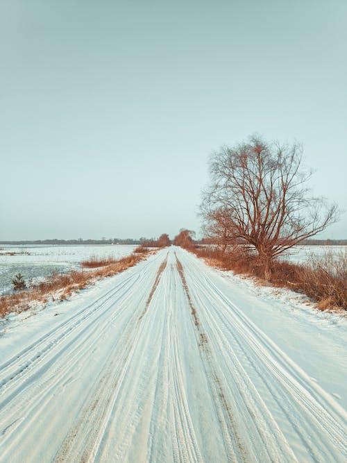 Immagine gratuita di coperto di neve, inverno, neve