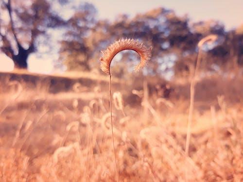 Fotos de stock gratuitas de amanecer, árbol, campo, césped