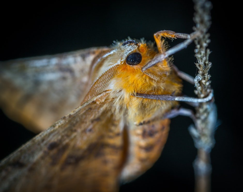 Close-Up Photography of Brown and Orange Moth