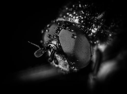 Základová fotografie zdarma na téma bezobratlí, černobílý, fotografování zvířat, hloubka ostrosti