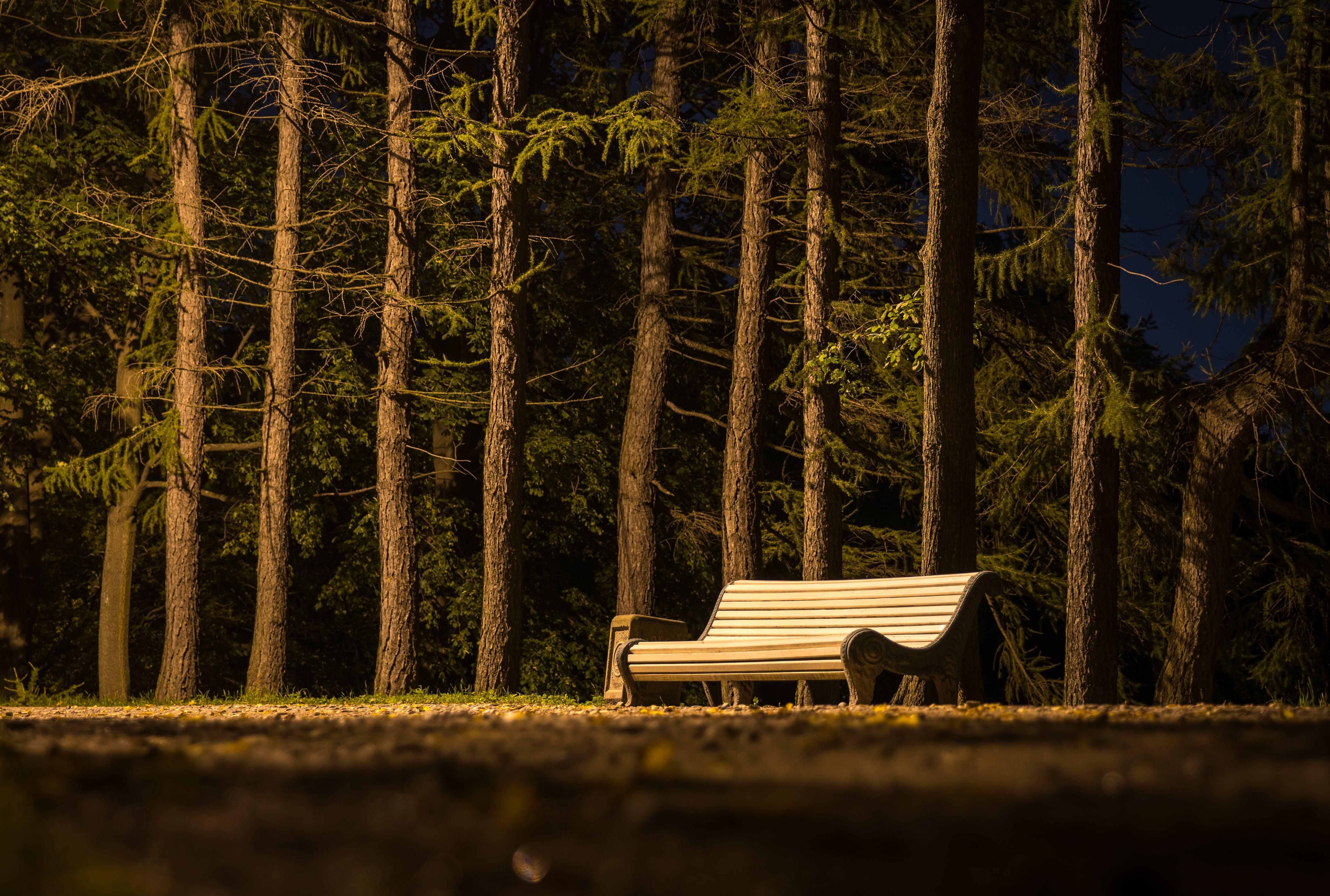 Gratis lagerfoto af bænk, dagslys, græs, landskab