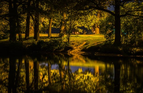 Gratis stockfoto met bomen, Bos, bossen, gras