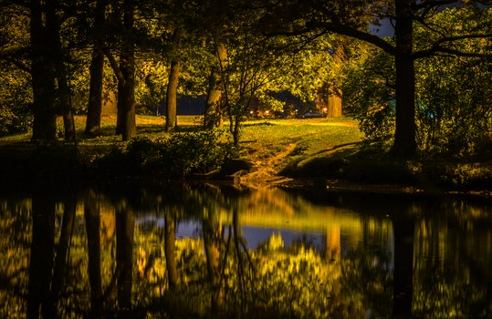 Lake Beside Forest Photography
