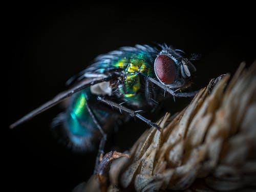 Foto d'estoc gratuïta de ala, animal, biologia, colors