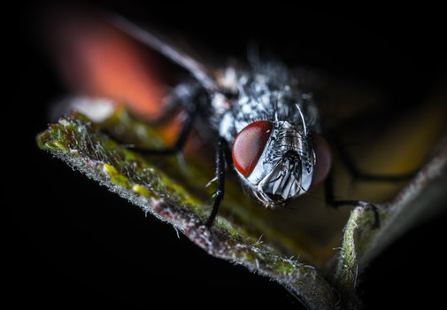 Close-up Photography Fly on Green Leaf Plant