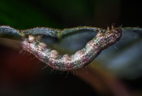Ilmainen kuvapankkikuva tunnisteilla eläin, hiukset, hyönteinen, makrokuvaus