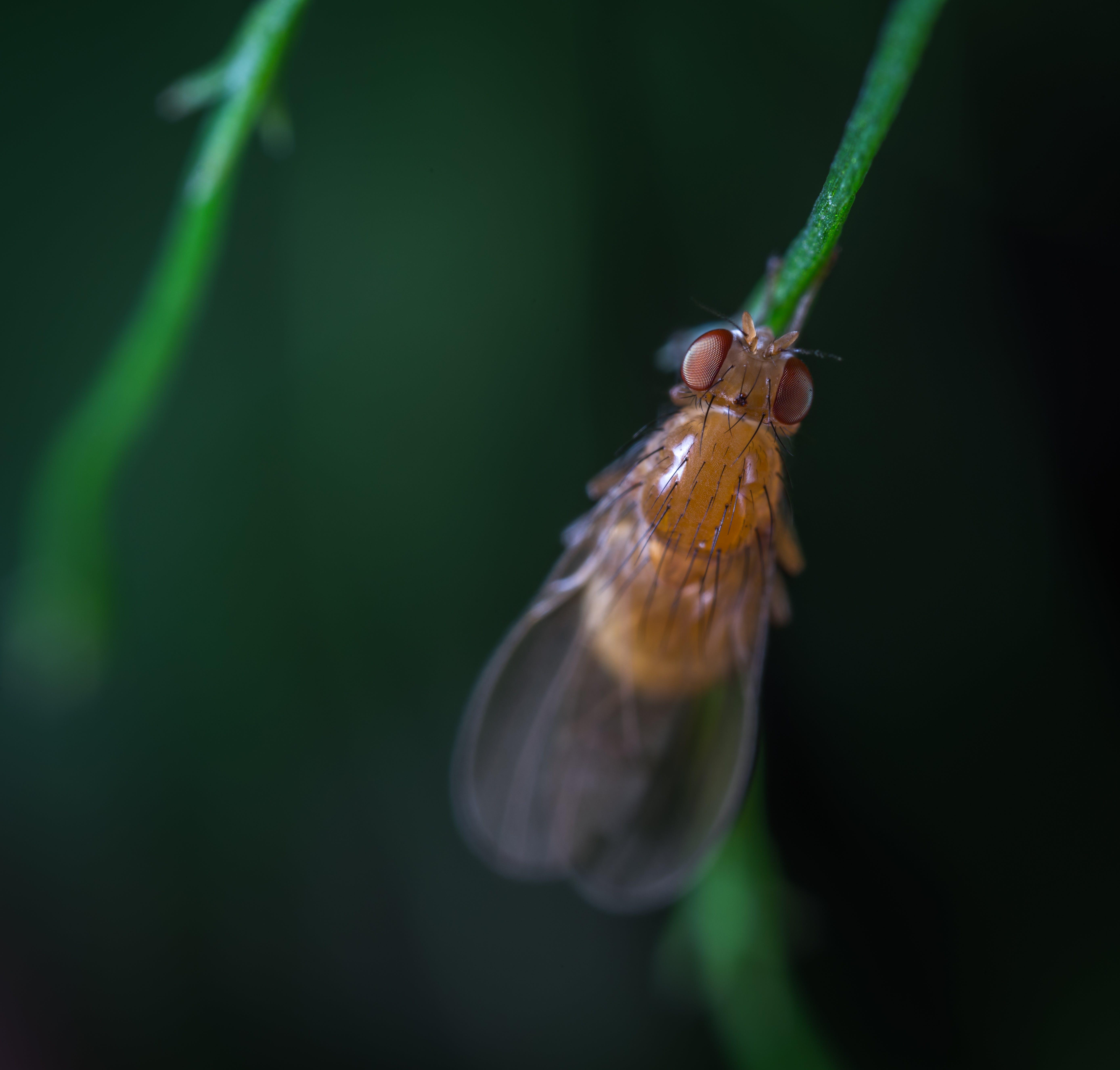 Kostenloses Stock Foto zu biologie, entomologie, flügel, insekt