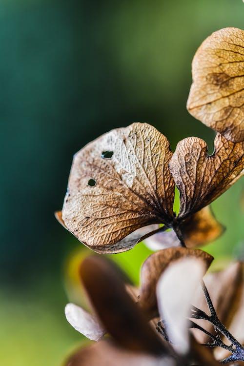 乾枯, 增長, 夏天, 季節 的 免费素材照片