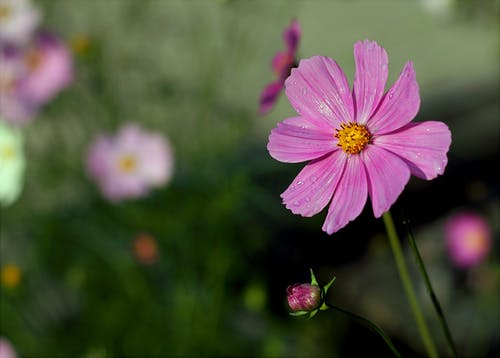 Foto stok gratis berbunga, berkembang, bunga, bunga-bunga