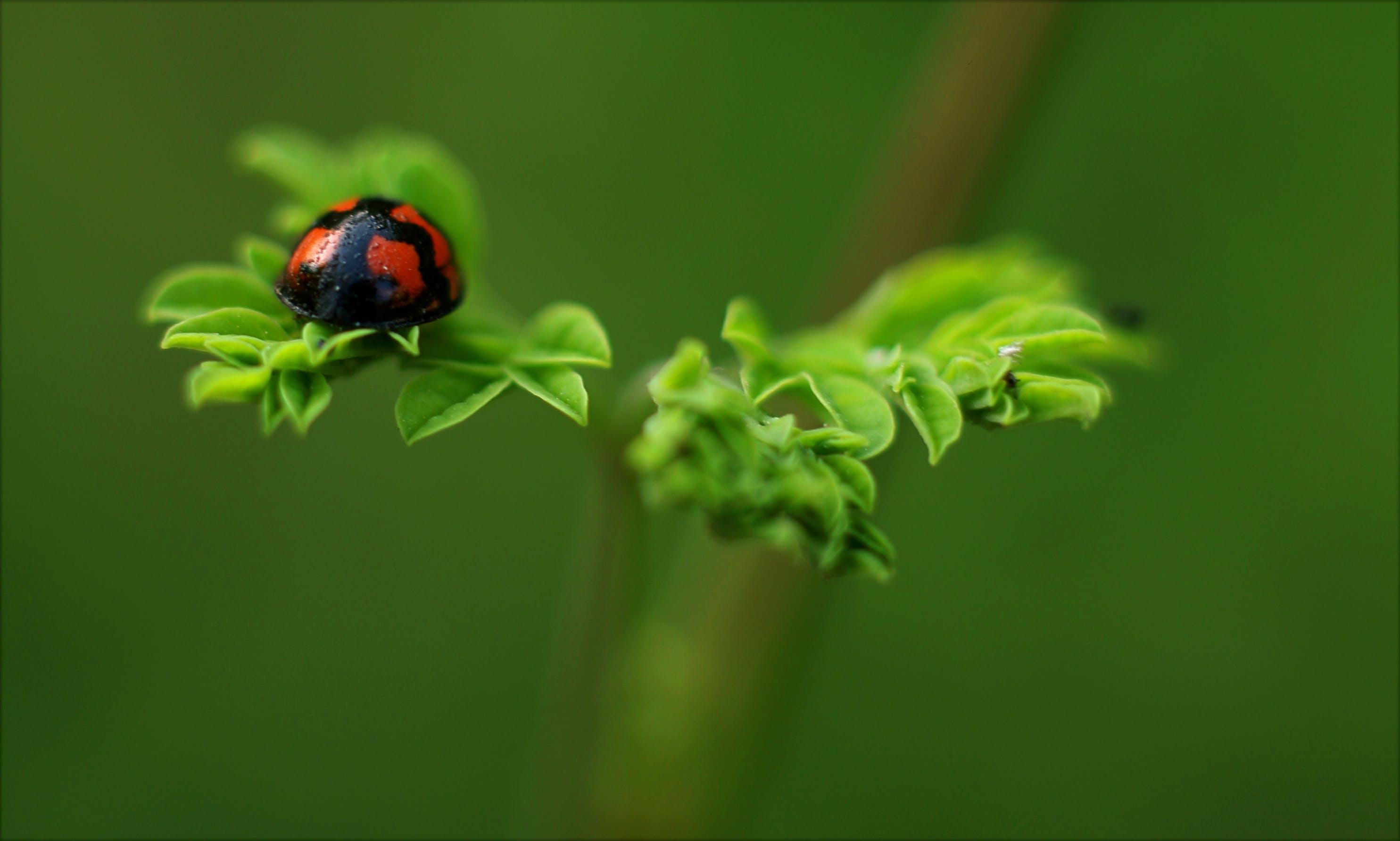 Selective Focus Photography of Ladybug