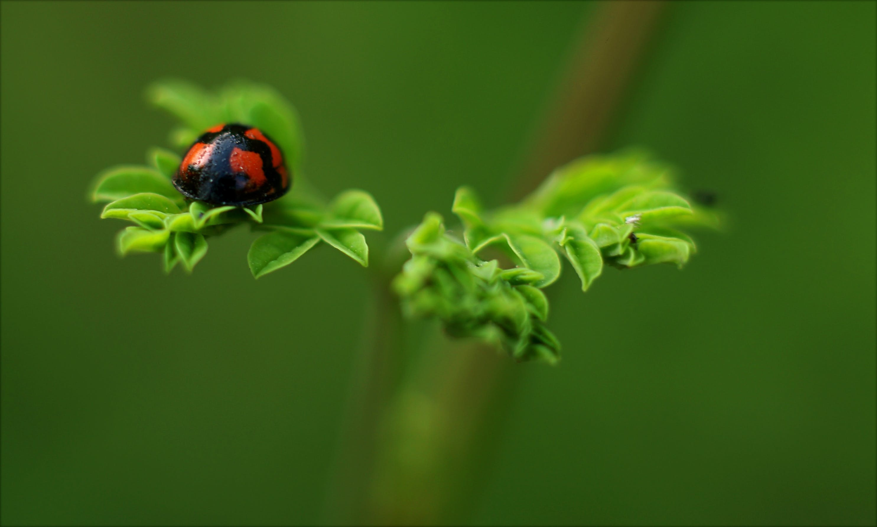 biologie, blätter, flora