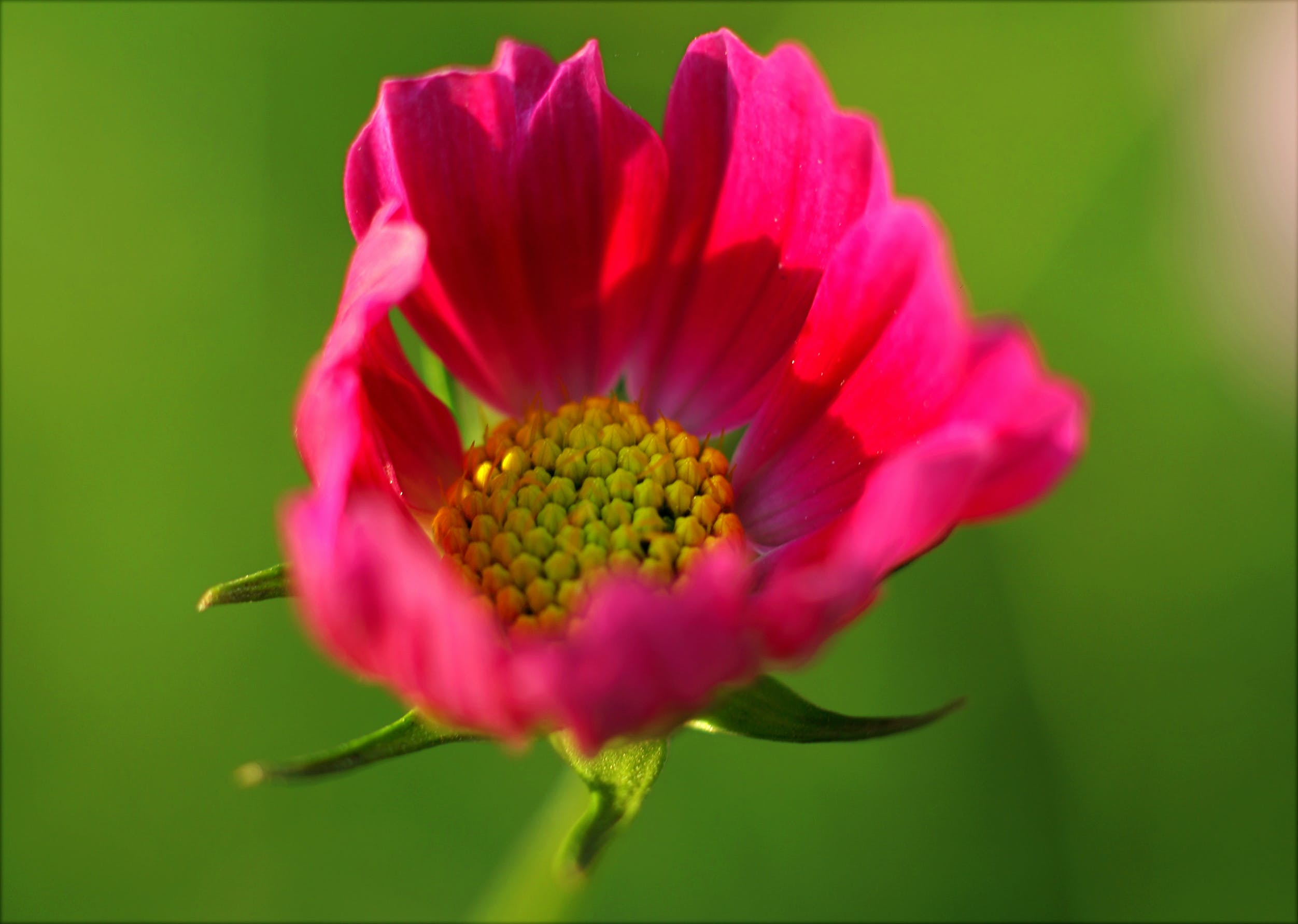 Close-up Photography of Flower