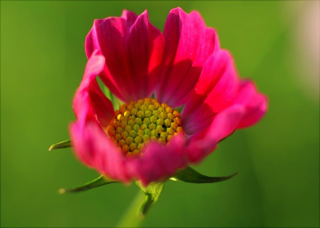 bloeien, bloeiend, bloem