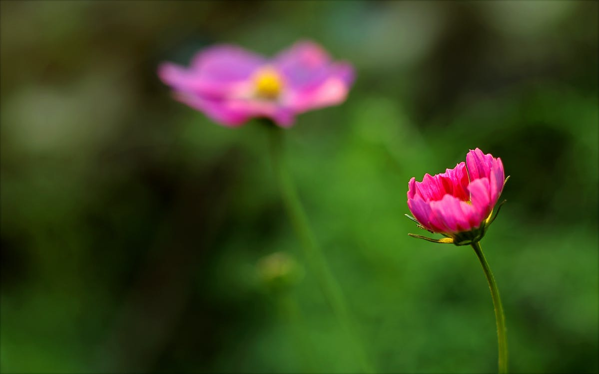 flóra, hloubka ostrosti, jasný