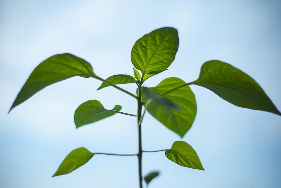 environment, green, growth