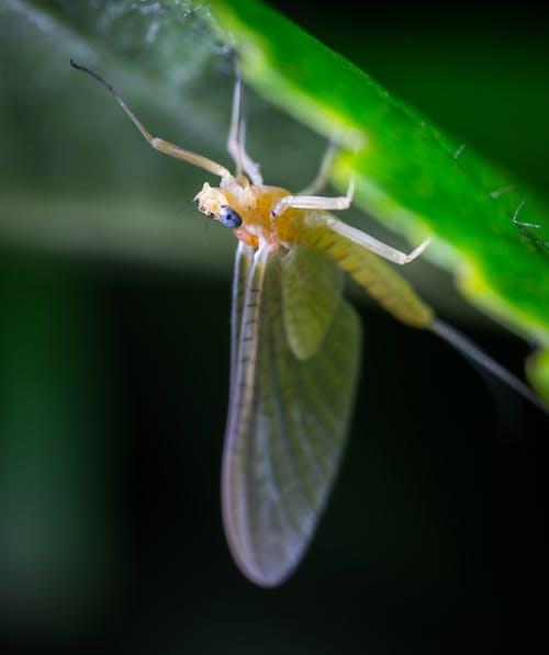 Безкоштовне стокове фото на тему «бабочка, великий план, делікатний, Ентомологія»