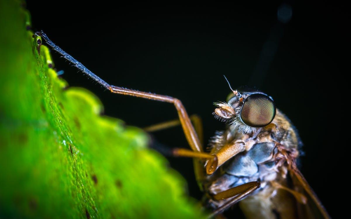 biologi, dyr, entomologi