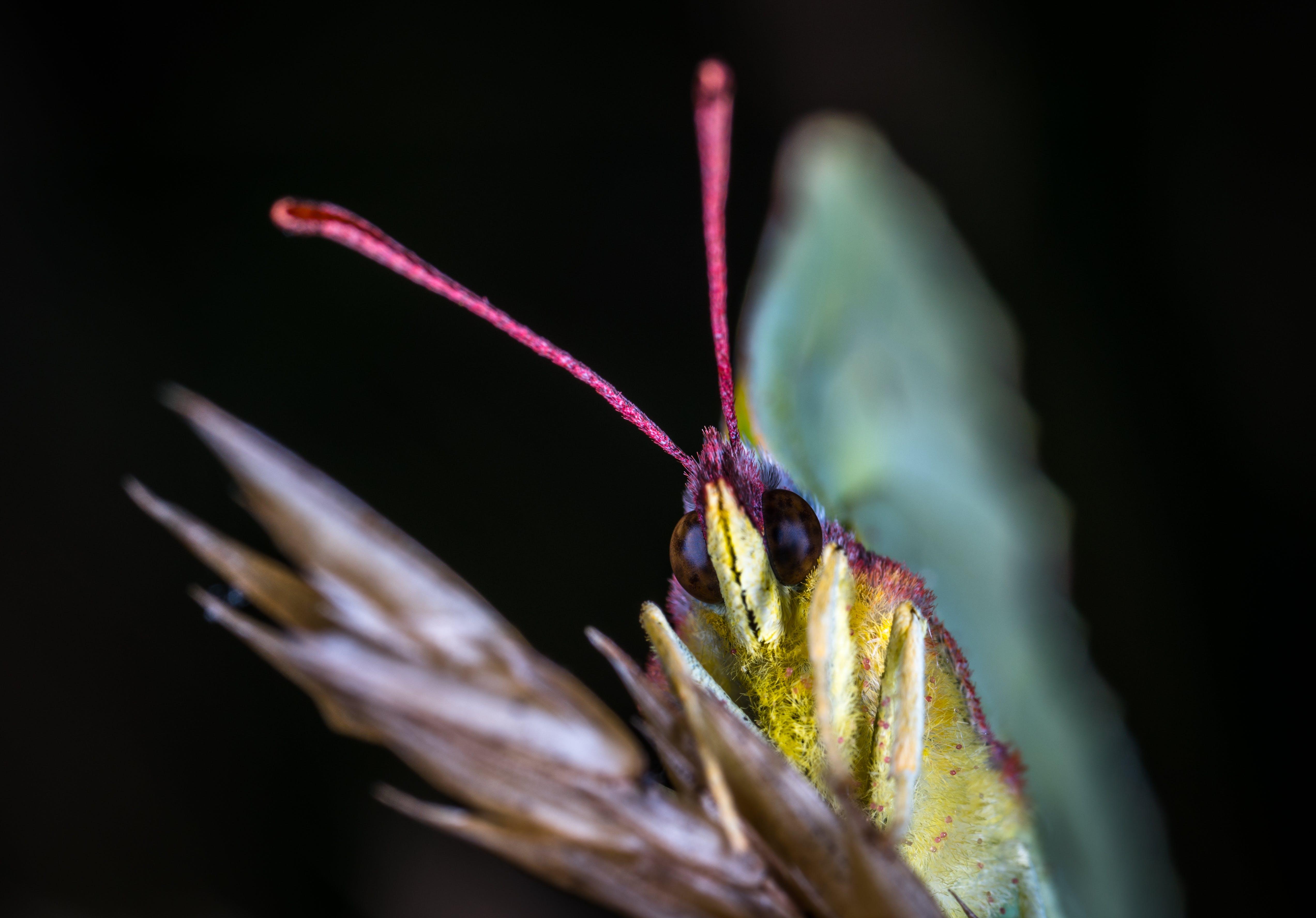 Foto profissional grátis de animal, asas, biologia, borboleta