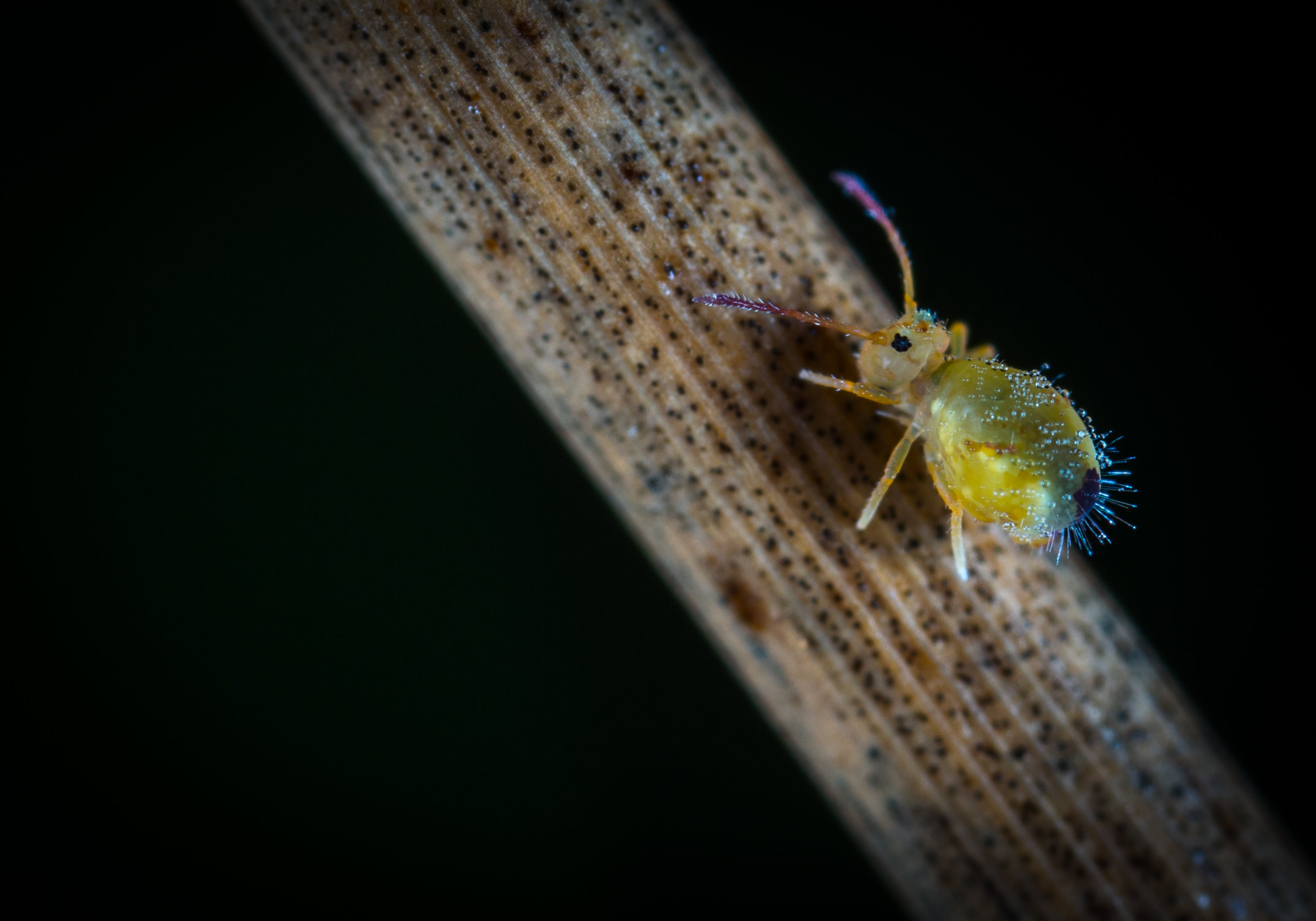 Macro Photography Of Yellow Six Legged Insect