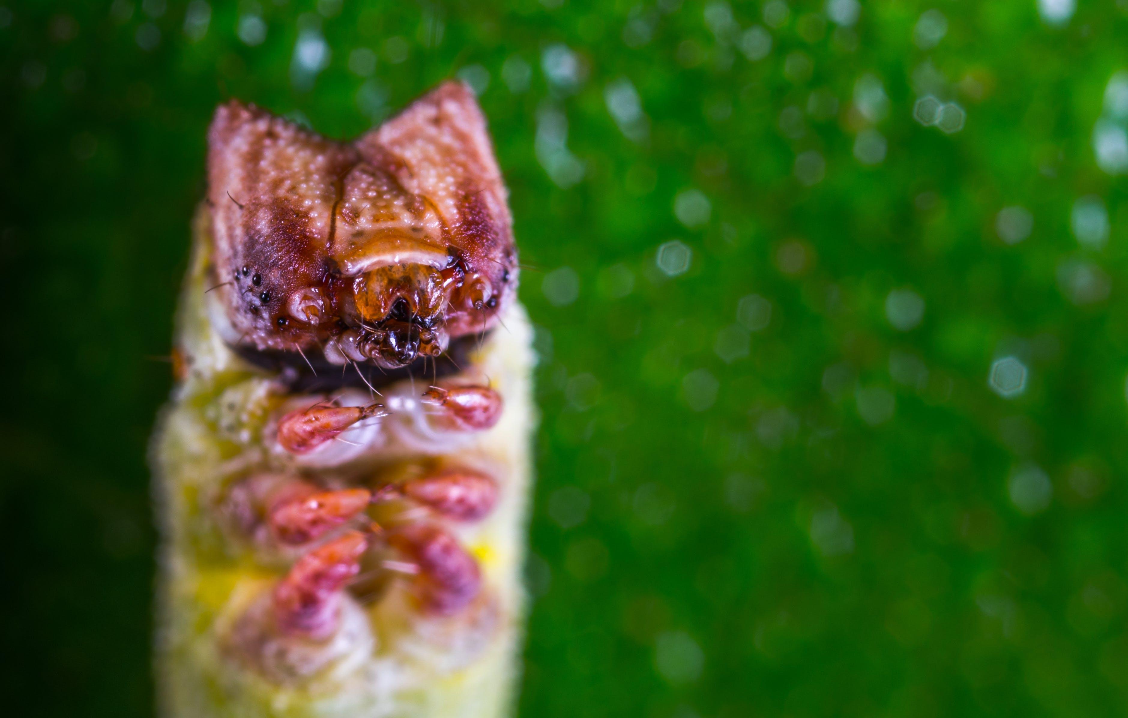 caterpillar, insect, macro