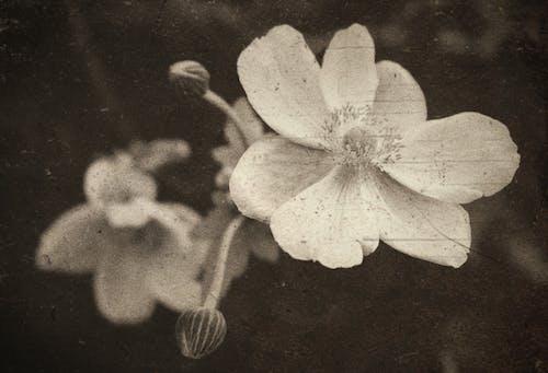 Immagine gratuita di avvicinamento, bianco e nero, danneggiato