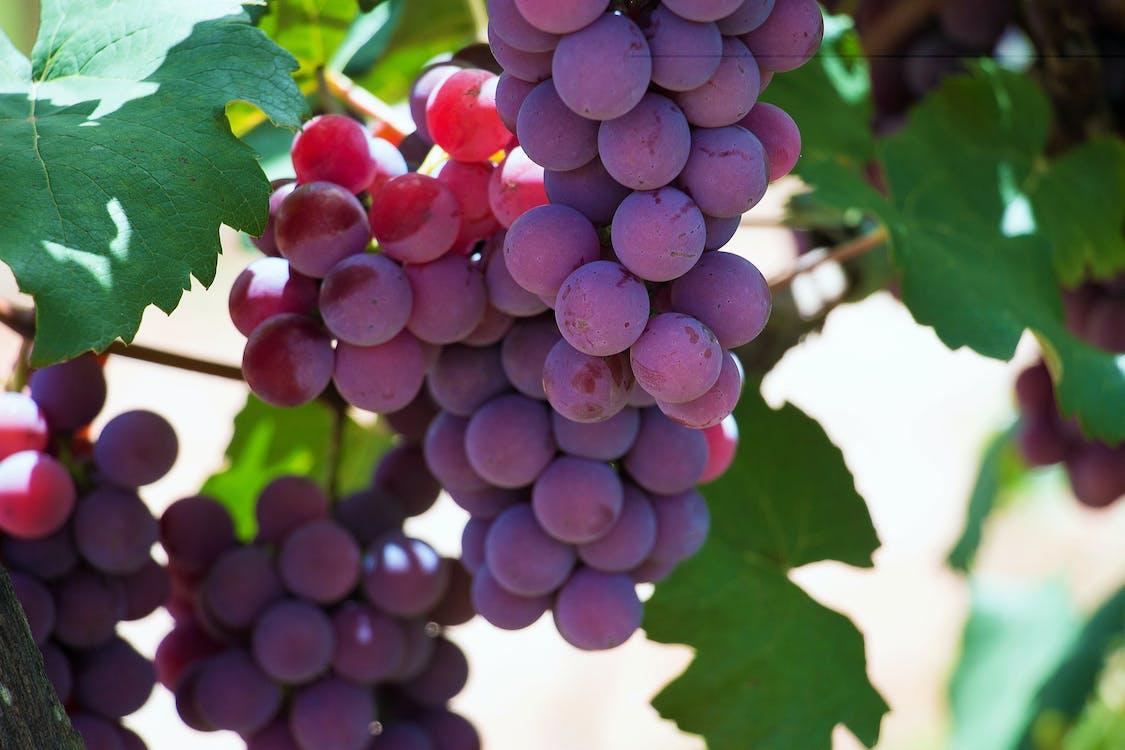 cachos, couleur, raisin