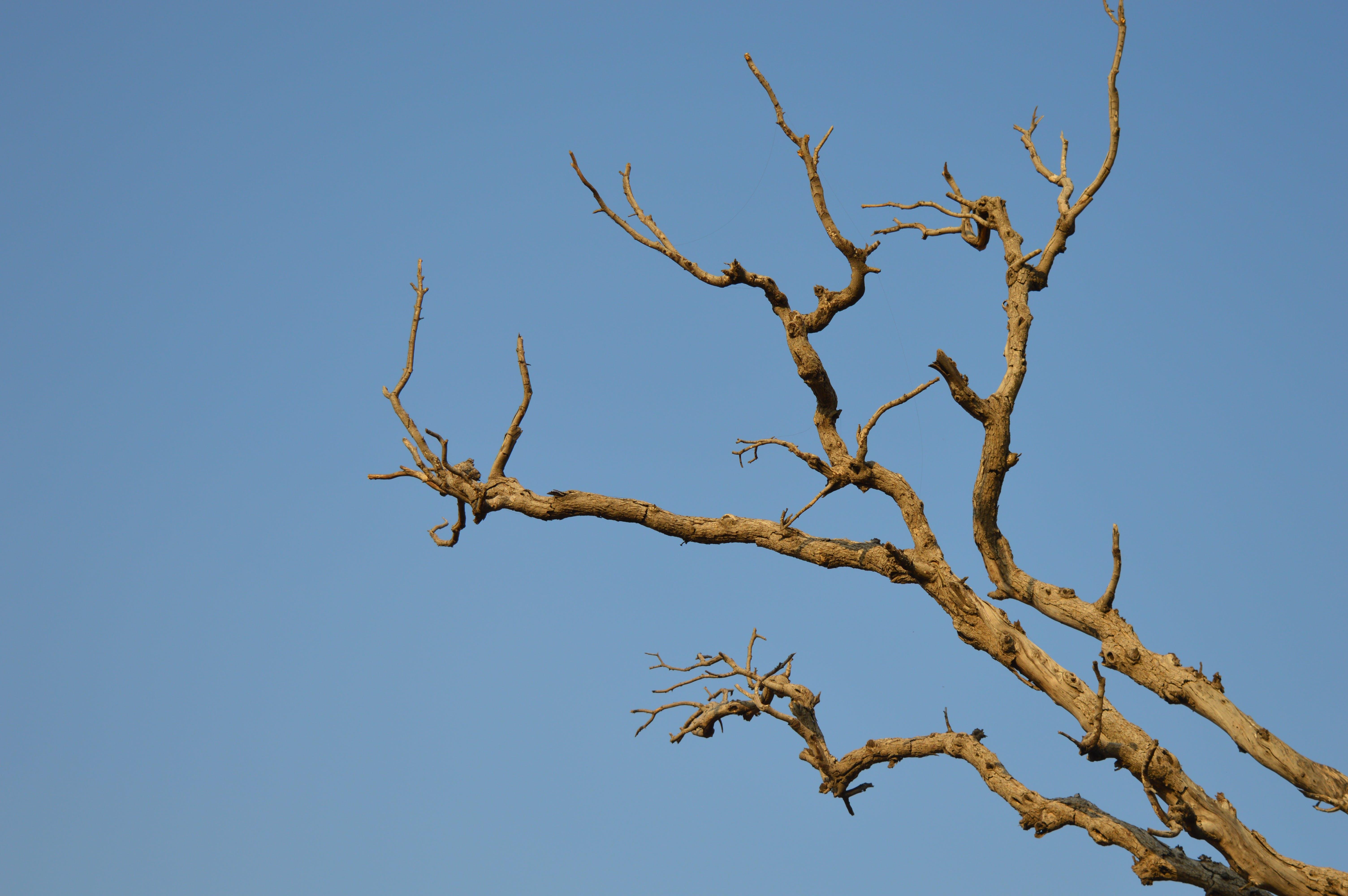 Foto profissional grátis de árvore, céu azul, céu limpo, filiais