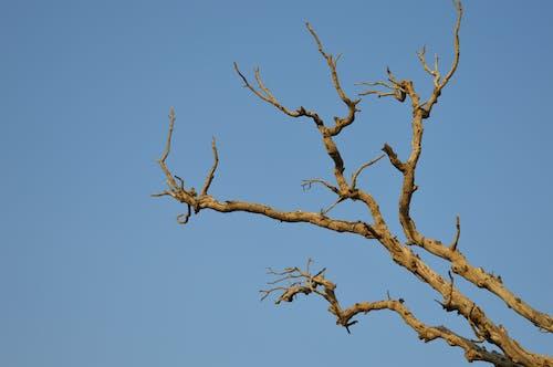 Foto profissional grátis de ao ar livre, árvore, céu azul, céu de brigadeiro