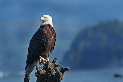 Eagle Perched on Top of a Tree Branch