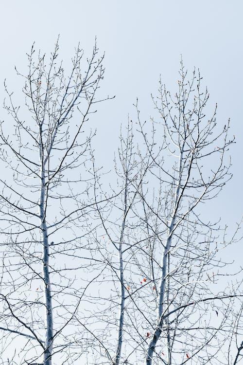 Foto stok gratis batang pohon, beku, cabang