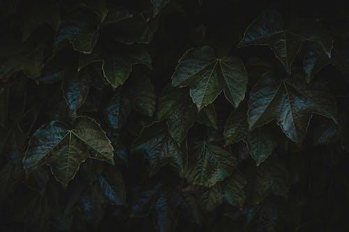 Fotos de stock gratuitas de abstracto, árbol, Arte