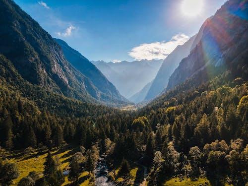 Безкоштовне стокове фото на тему «гора, Денне світло, Деревина»