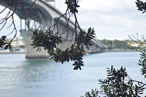 Ingyenes stockfotó habour híd témában