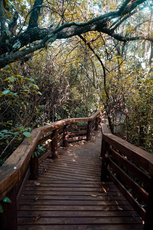 Brown Wooden Bridge in Forest