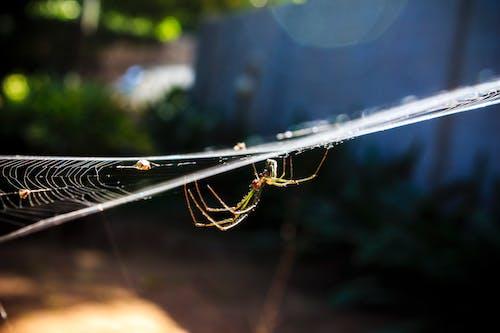 Бесплатное стоковое фото с беспозвоночный, дикая природа, животное, интернет