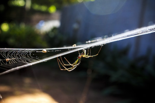 Garden Spider on Web in Close-up Photography