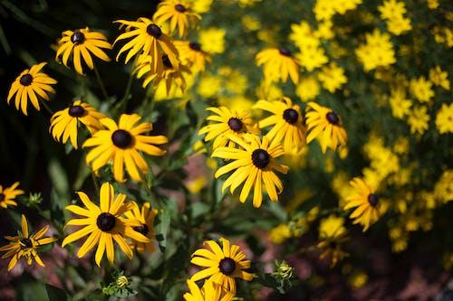 꽃, 노란색의 무료 스톡 사진